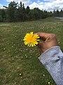Flower,jpg.jpg
