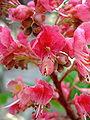 Flower-center134812.jpg