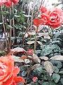Flower20180428 085509.jpg