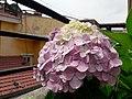 Flower20180523 101117.jpg
