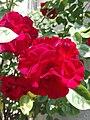 Flower Dortmund 19.jpg
