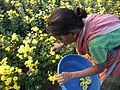 Flower picking woman.JPG