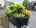 Flower planter on fence, Chingford Mount Road, London Borough of Waltham Forest, England.jpg