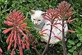 Flowercat (27285474422).jpg