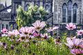 Flowers and church (8109766393).jpg