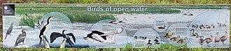 Fogg Dam Conservation Reserve - Birds of Open Water