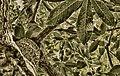 Folhas Botânico.jpg