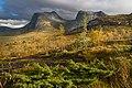 Foliage in autumn colors in Efjorddalen, Narvik, Nordland, Norway, 2018 September.jpg