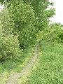 Footpath - Walkley Terrace - geograph.org.uk - 1299952.jpg