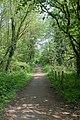 Footpath along eastern edge of Great Covert woodland - geograph.org.uk - 802810.jpg