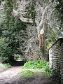 Footpath past the Old Hall - geograph.org.uk - 723845.jpg