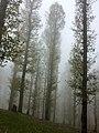 Forêt de Chaine Zen.jpg