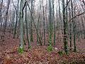 Forêt domaniale de La Petite-Pierre Sud (2).jpg