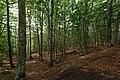 Forêt domaniale de l'Assise 2017-08 n01.jpg