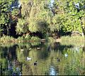 Ford Park, Upper Pond with Ducks, Redlands, CA 8-12 (7796879314).jpg