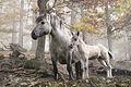 Forest-horses-edit.jpg