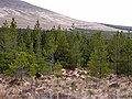 Forest below the slopes of Tawnaghmore - geograph.org.uk - 1854774.jpg