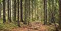 Forest in Jyväskylä 3.jpg