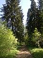 Forest path - panoramio (2).jpg