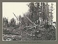 Forests destroyed by the La Perouse Glacier, Alaska, June 1899 (HARRIMAN 58).jpg