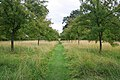 Formal garden at Hardwick Hall - geograph.org.uk - 1444327.jpg