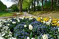 Frühling im Bad Mergentheimer Kurpark. 23.jpg