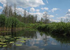 Fürstenberg/Havel - Stream near Tornow