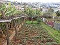 Galeão, São Roque, Funchal - 26 Jan 2012 - SDC15426.JPG