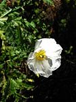 Gardenology.org-IMG 2640 ucla09.jpg
