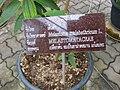 Gardenology.org-IMG 7808 qsbg11mar.jpg