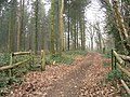 Gateway to public footpath out of Dunbridge - geograph.org.uk - 698469.jpg