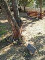Geertruida Wijsmuller-Meyer tree1.jpg