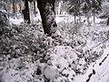 Giardini Tito Rosina - panoramio.jpg