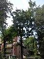 Giardino botanico di Brera (Milan 29.jpg