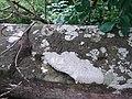 Glen Bridge Graffiti - geograph.org.uk - 895403.jpg