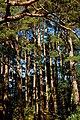 Glenveagh National Park - Trees near castle - geograph.org.uk - 1188734.jpg