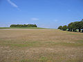Goffers Knoll, Melbourn, Cambs - geograph.org.uk - 53045.jpg