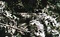Gorges du Tarn b.jpg