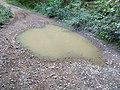 Grande flaque d'eau sur une route forestière (Rhône, France, août 2018) - 2.jpg