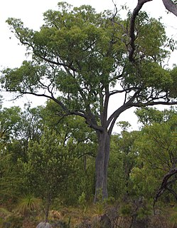 Greenmount National Park Protected area in Western Australia