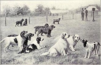 Gun dog - A group of Gun dogs as printed in Dogs of All Nations by W.E. Mason in 1915