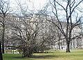 GuentherZ Naturdenkmal 477 2010-03-20 0022 Schmerlingplatz Persische Parrotie.jpg