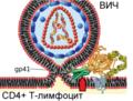 HIV Membrane fusion panel rus 4.png