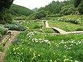 Hananosato-Takidani Japanese Iris Garden01.jpg
