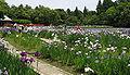 Hanashobu garden on Magatama Pond01.jpg