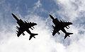 Harriers (5087353582).jpg