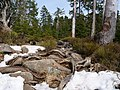 Harz near Bodebruch 06.jpg
