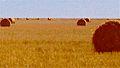 Hay, Argentina.jpg
