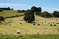 Hay field near Penygarreg - geograph.org.uk - 1438300.jpg