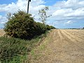 Hedgerow and Field - geograph.org.uk - 1467566.jpg